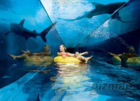 Atlantis Hotel in Dubai is home to more than 65000 marine animals