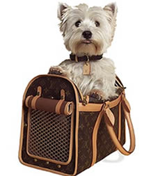 Детский сад для собак мини пород Luxury Dog.