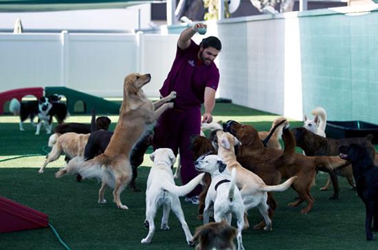 Почему собаки живут лучше, чем я?