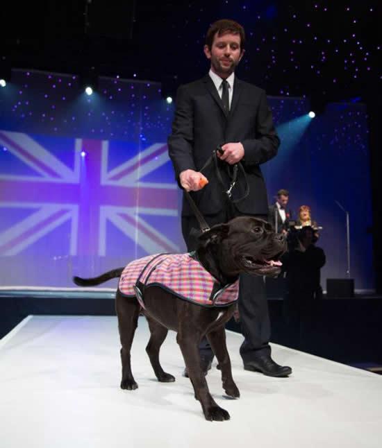dogs-designer-3.jpg