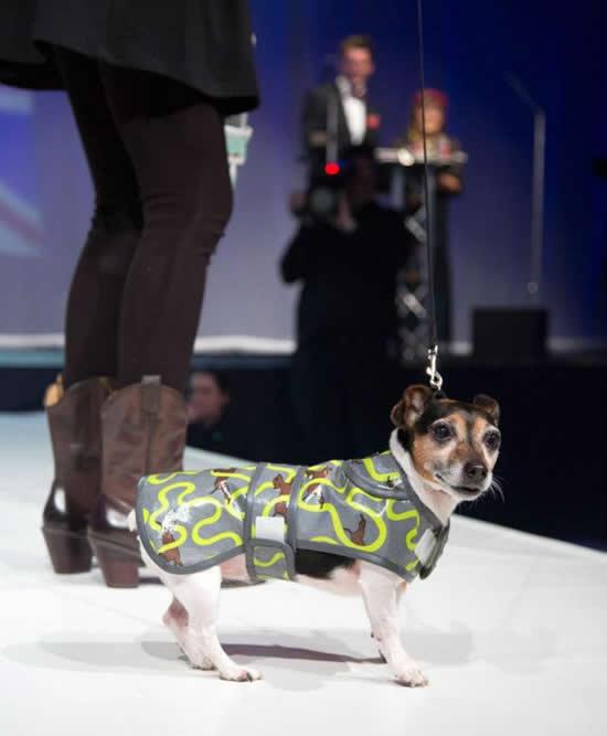 dogs-designer-5.jpg