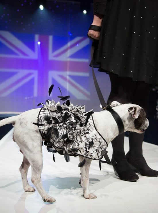 Swarovski studded dog coat to be auctioned for the Collars and Coats fundraiser