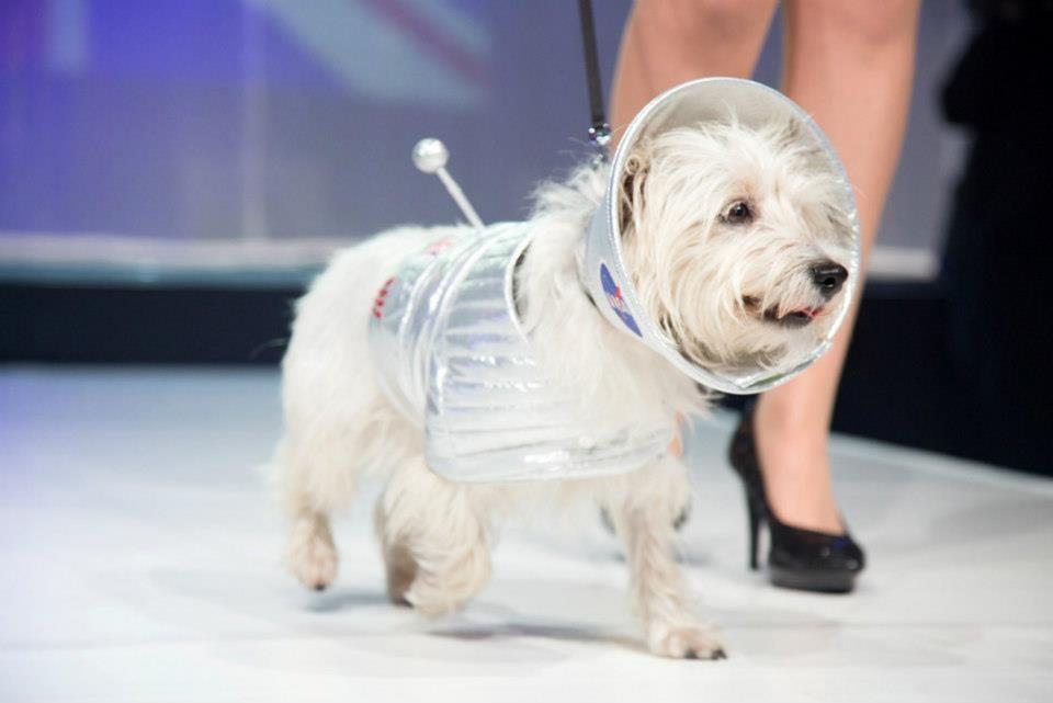 dogs-designer-9.jpg