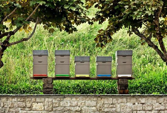 jaeger-lecoultre-honey-2.jpg