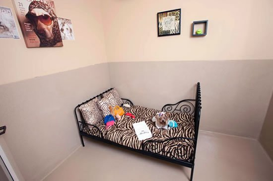 Barkley-luxury-pet-hotel-2.jpg