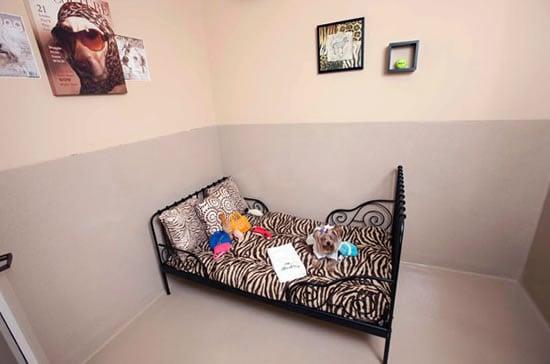 Barkley-luxury-pet-hotel-2.jpg