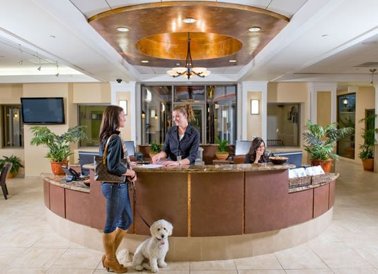 Barkley-luxury-pet-hotel-6.jpg