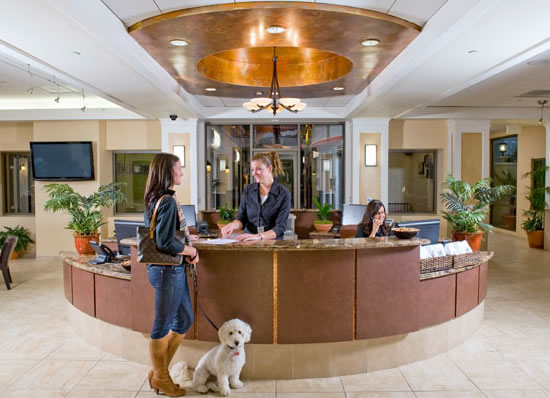 Barkley-luxury-pet-hotel-6.jpg