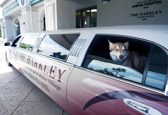Barkley-luxury-pet-hotel-7.jpg
