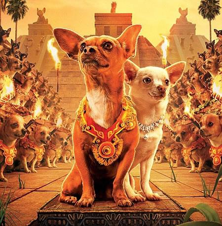 Chihuahua_Slumdog_Millionaire_2.jpg