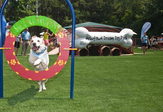 Dream-Dog-Park-4.jpg