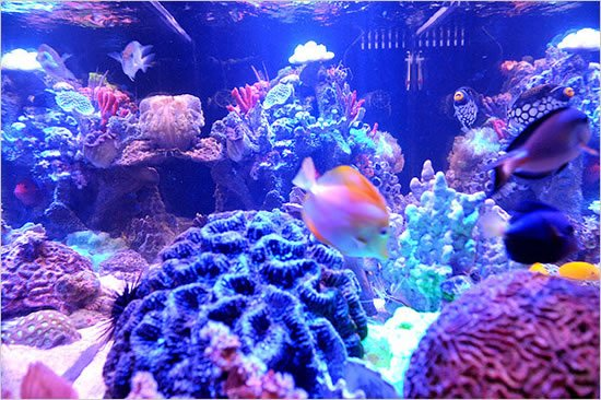 Fish-Tanks-3.jpg