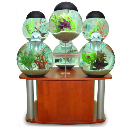 Labyrinth_Aquarium_2.jpg