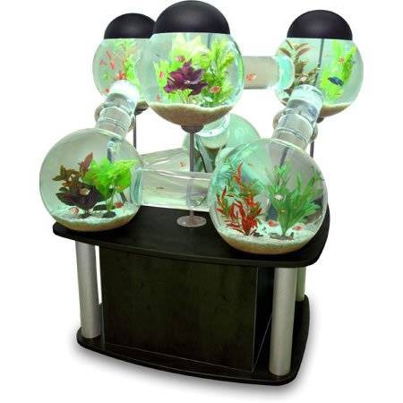 Labyrinth_Aquarium_4.jpg