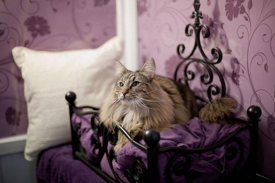 Longcroft_Luxury_Cat_Hotel.jpg