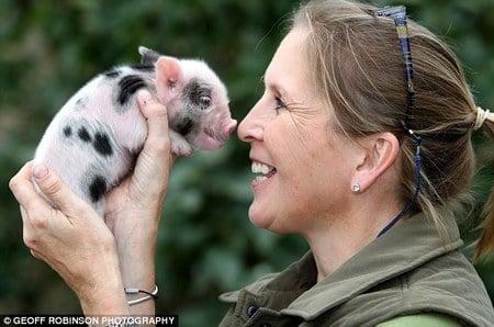 Micro_Pigs2.jpg