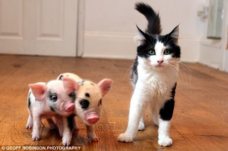 Micro_Pigs3.jpg