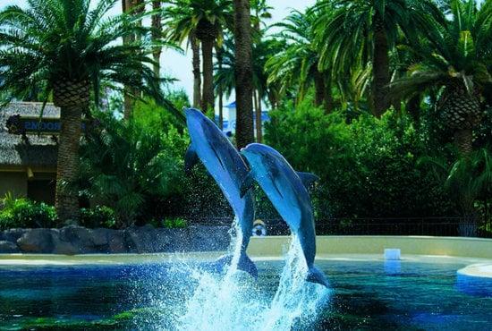 Mirage-Las-Vegas-5.jpg