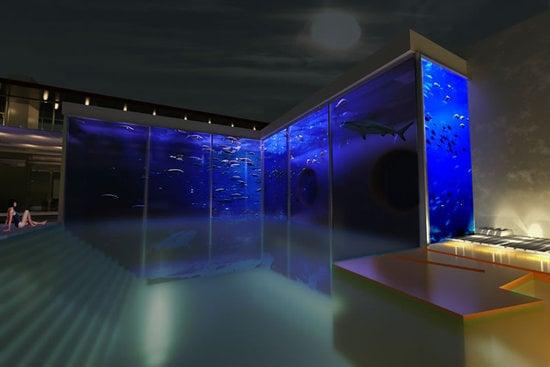 Okeanos_Aquascaping_swimmingpool_shark_aqaurium_2.jpg