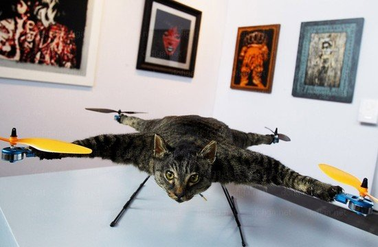Orvillecopter-cat-helicopter-4.jpg