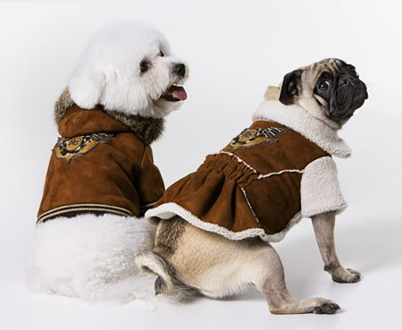 cavalli-duds-for-pets2.jpg