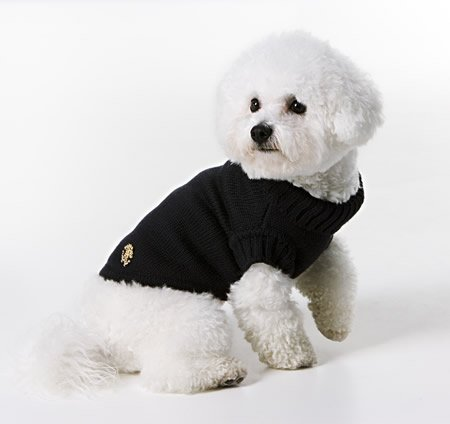 cavalli-duds-for-pets4.jpg