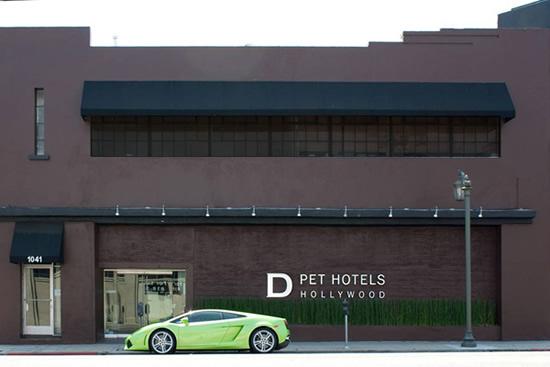d-pet-hotels-2.jpg