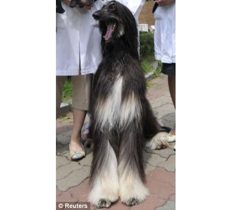 dog-clone.jpg