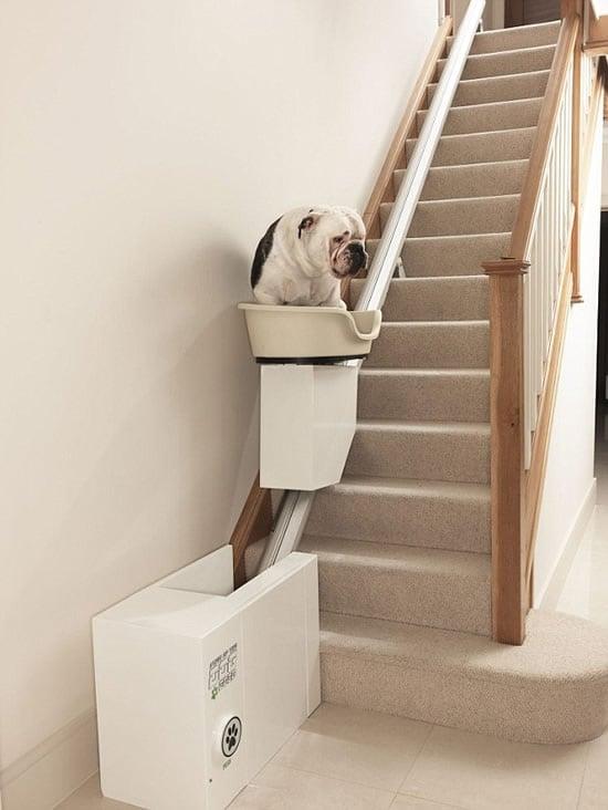 dog-lift-3.jpg