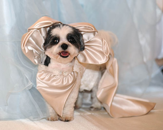 dog-wedding-2.jpg