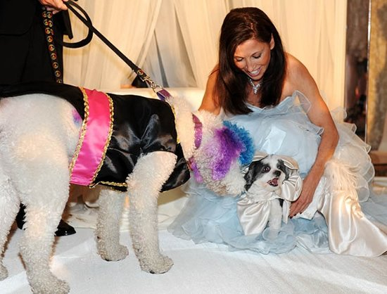 dog-wedding-3.jpg