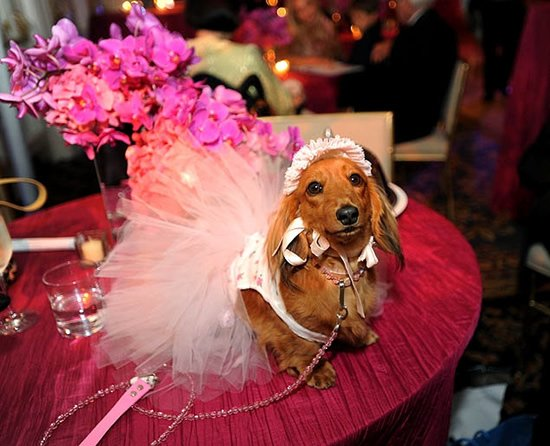 The most expensive pet wedding estimated at $250,000 holds a Guinness World Record