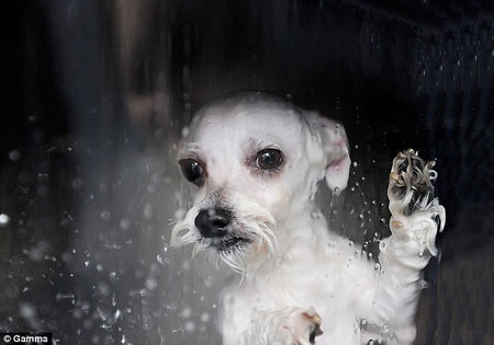 dog_washing_machine4.jpg