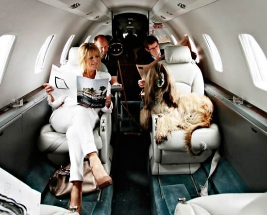 Dogs fly in leather seats alongside their owners on a for Traveling on a plane with a dog
