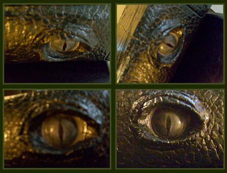 gator_xbox_360_2.jpg