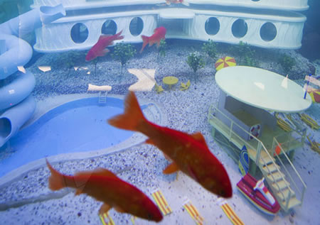 goldfish_hotel2.jpg