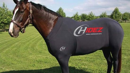 horse-suit-2.jpg