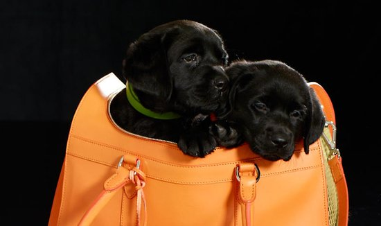 leather-dog-carrier-3.jpg