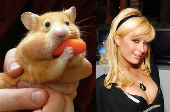 paris_hilton_pet_hamster-1.jpg