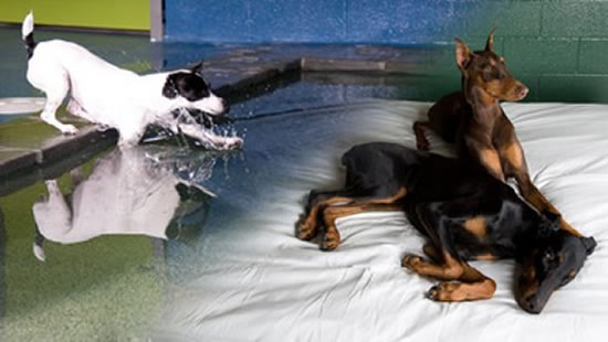 Pooch Hotel in California is the most expensive dog resort in USA