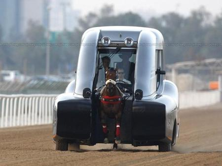 racehorse_training_3.jpg