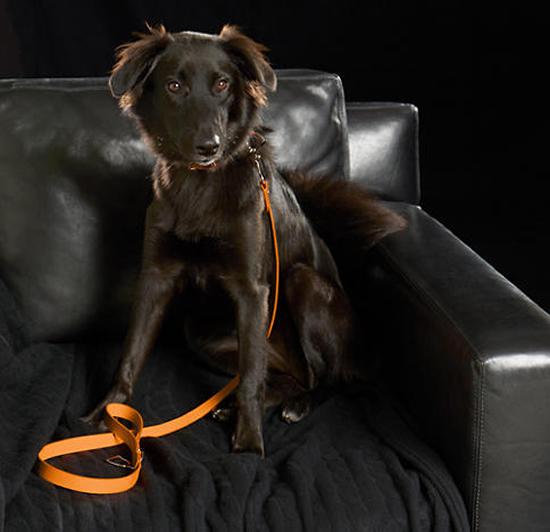 stirrup-dog-collar-2.jpg