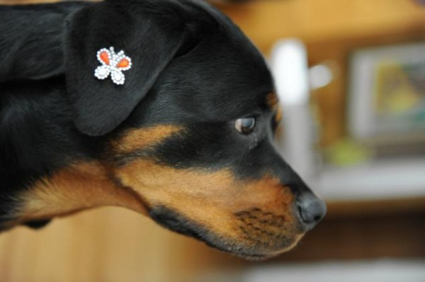 dog-tattoo-5