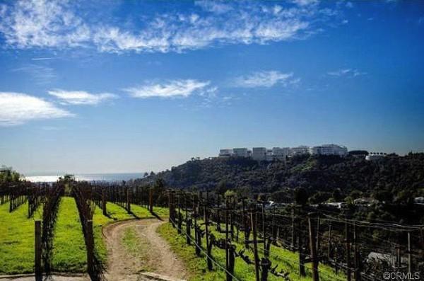 rupert-murdoch-vineyard-1