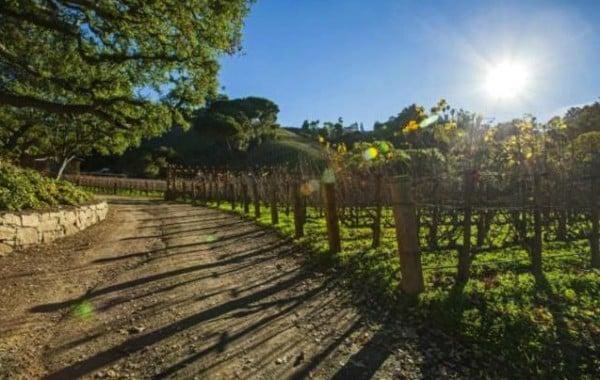 rupert-murdoch-vineyard-15