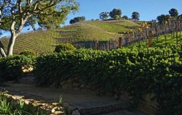 rupert-murdoch-vineyard-17